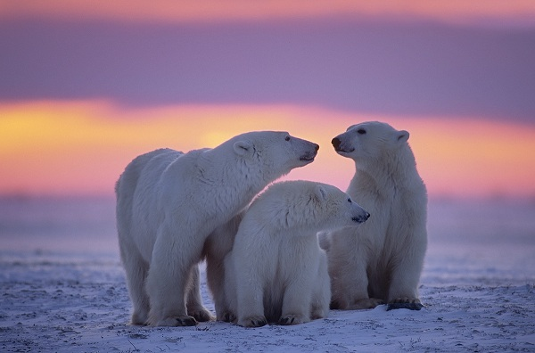 Protect the Arctic!