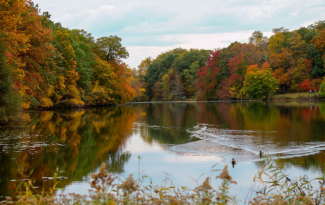 Swan Lake at the Rockefeller                                                           State Park                                                           Preserve in                                                           Pleasantville,                                                           New York