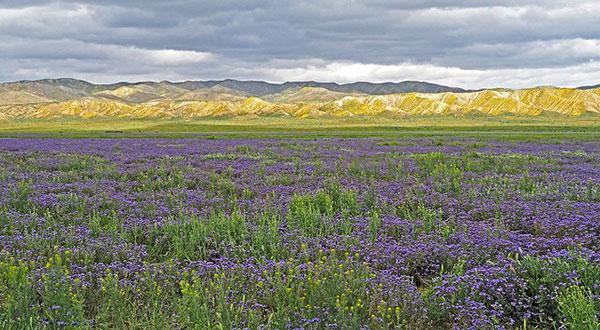 Carrizo                                                           Plain National                                                           Monument, San                                                           Luis Obispo                                                           County,                                                           California