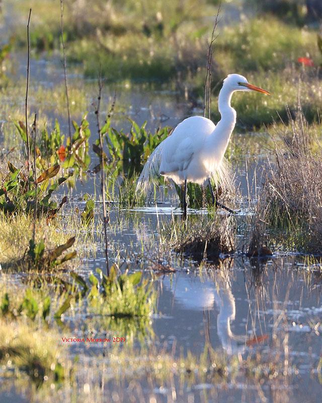 Near Twin                                                           Lakes in                                                           Mammoth Lakes,                                                           California