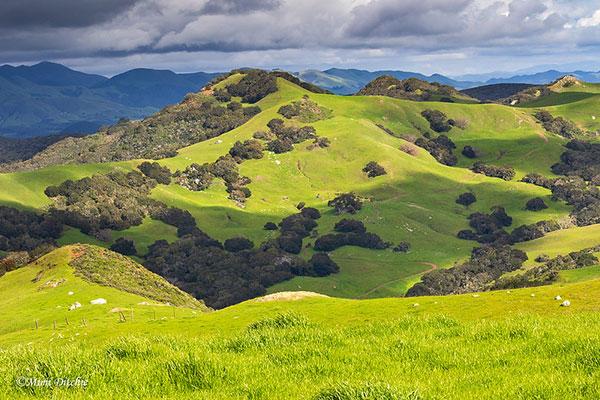 The Irish                                                           Hills outside                                                           of San Luis                                                           Obispo,                                                           California