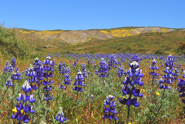 Carrizo Plain National                                             Monument, San Luis Obispo                                             County in California