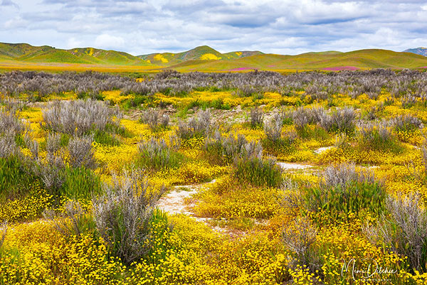 Carrizo Plains National Monument in California