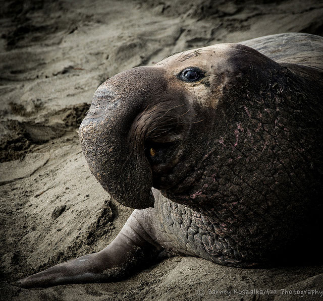 -- Morro Bay                                         sandspit, Morro Bay, California                                         --