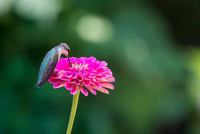 -- Hummingbird --             near Washington D.C. --