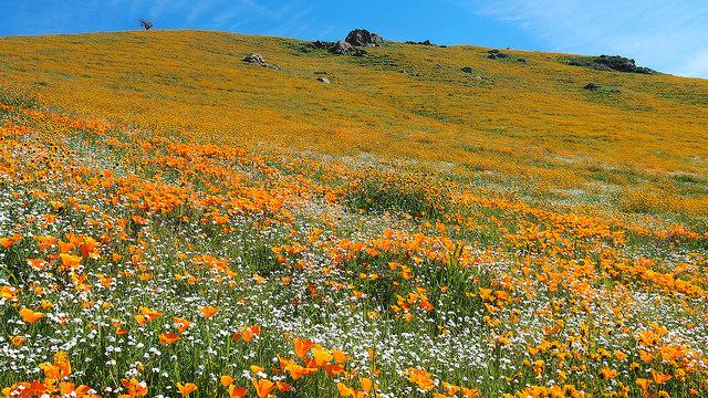 --                         Tejon Ranch, Tehachapi Mountains, California --