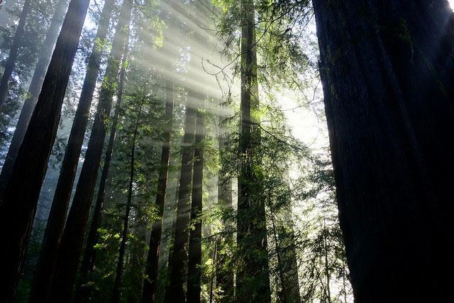 --                        Humboldt Redwoods State Park, Weott, California                        --
