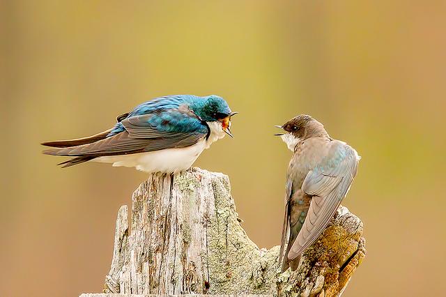 -- Two birds --