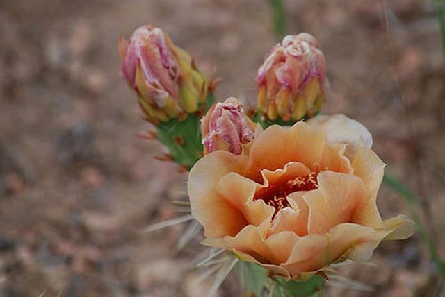 --                        Dixon, New Mexico --