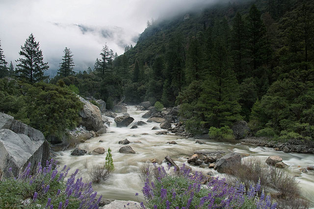 --                        Merced River in Yosemite National Park in                        California near the west arch entrance --