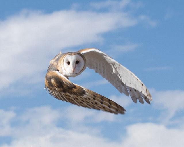 --                         Juvenile burrowing owl in south Tucson, Arizona                         --
