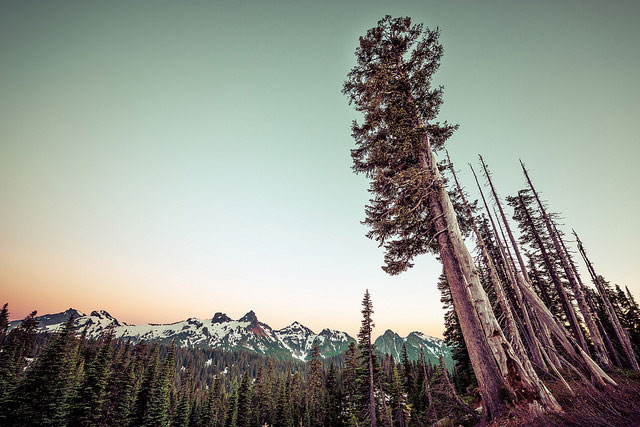-- Paradise, Mt.         Rainier National Park, Washington --