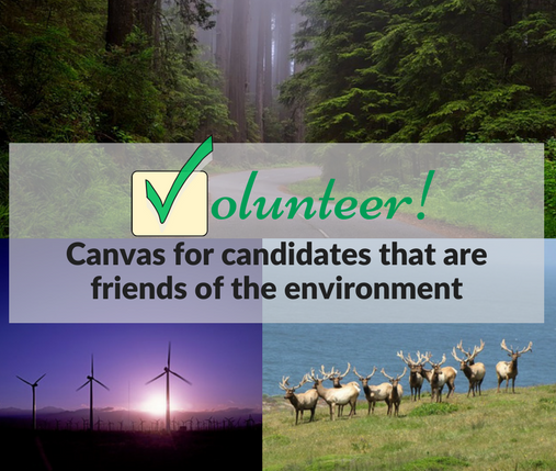 Volunteer in 2018